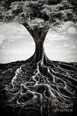 Shades Of Gray - Back To The Roots by Evelina Kremsdorf