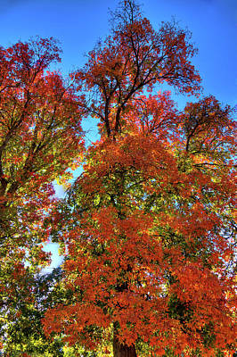Photograph - Backlit Autumn by David Patterson