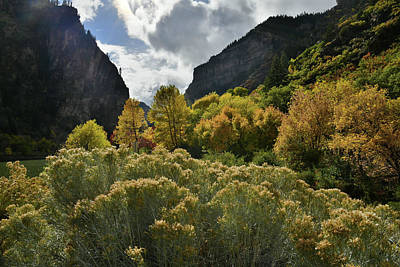 Photograph - Backlit Fall Colors In Glenwood Canyon by Ray Mathis