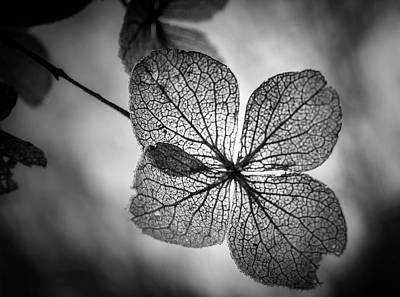 Photograph - Backlit Leaves In Black And White by Chrystal Mimbs