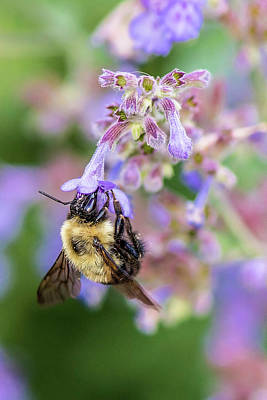 Photograph - Backyard Beauty And The Bee by Thomas Gaitley