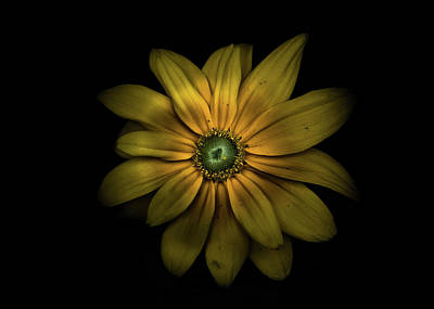 Art Print featuring the photograph Backyard Flowers 34 Color Version by Brian Carson