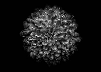 Bath Time - Backyard Flowers In Black And White 46 by Brian Carson