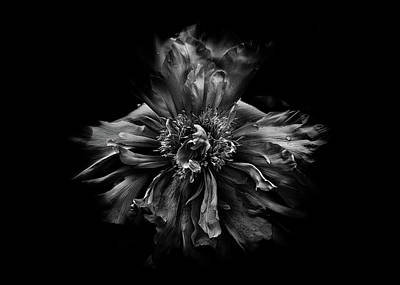 Bath Time - Backyard Flowers In Black And White 49 by Brian Carson