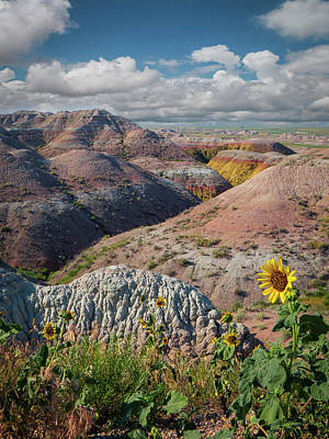 Photograph - Badlands Sunflower - Vertical by Patti Deters