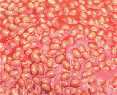 Soap Suds - Baked beans by Seeables Visual Arts
