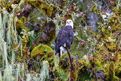 World War 2 Action Photography - Bald Eagle 2018 by Mike Centioli