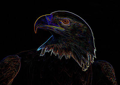 Digital Art - Bald Eagle Digital Art by Chris Flees