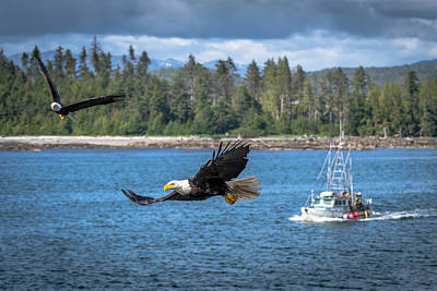 Photograph - Bald Eagle Escort by Russell Cody