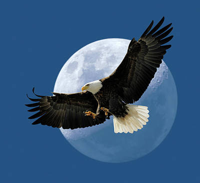 Eagle Photograph - Bald Eagle Flying In Front Of Moon by Jamesbrey