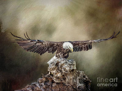 Photograph - Bald Eagle Landing by Brian Tarr