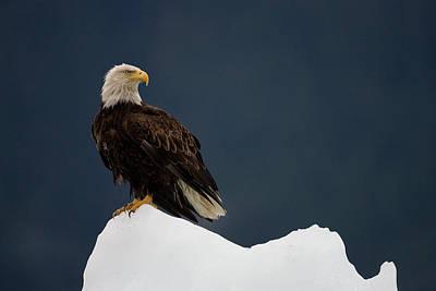 Eagle Photograph - Bald Eagle On Iceberg, Alaska by Paul Souders