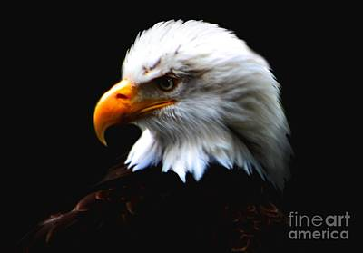 Bringing The Outdoors In - Bald Eagle Profile by Nick Gustafson
