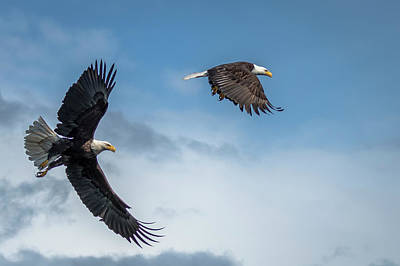 Photograph - Bald Eagles  by Russell Cody