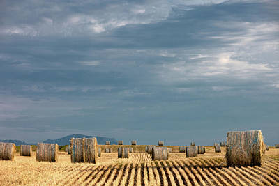 Photograph - Bales After The Storm by Todd Klassy