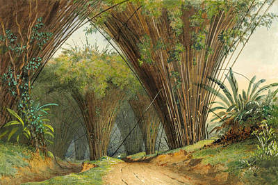 Drawing - Bamboo Arch by Michel Jean Cazabon