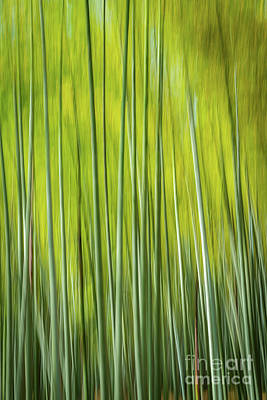 Photograph - Bamboo Blur by Paul Woodford