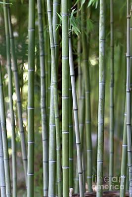 Photograph - Bamboo Grove II by George Atsametakis