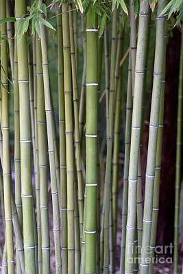 Photograph - Bamboo Grove IIi by George Atsametakis