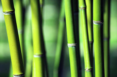 Botanical Photograph - Bamboo by Joelle Icard