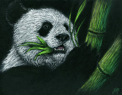 Still Life Drawings - Bamboo Panda by John Prehart