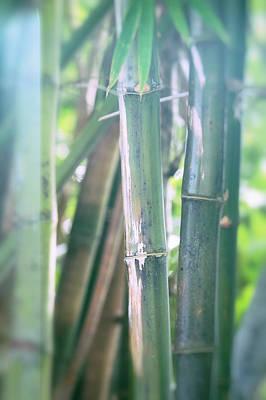 Photograph - Bamboo  by Saija Lehtonen
