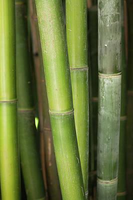 Photograph - Bamboo Stalk 4057 by Mark Shoolery