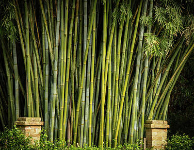 Photograph - Bamboo Wall by Jean Noren