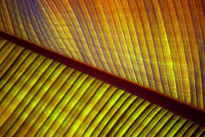 Photograph - Banana Leaf 8602 by Mark Shoolery