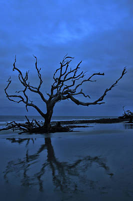 Photograph - Bare And Blue by Mary Buck