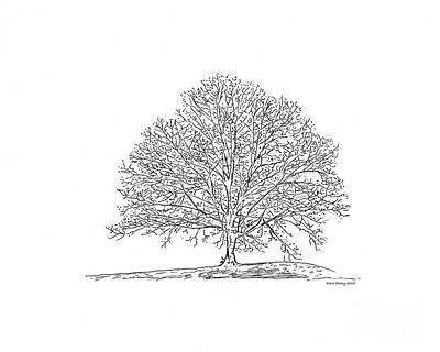 Drawing - Bare Branches - A Pen And Ink Drawing  by Kerri Farley