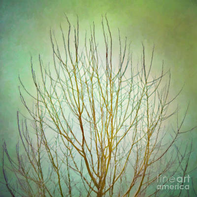 Photograph - Bare Tree In Winter by Hal Halli