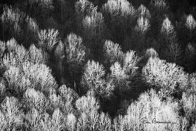 Dan Beauvais Royalty-Free and Rights-Managed Images - Bare Trees Shenandoah Valley 4259 by Dan Beauvais