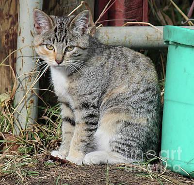 Photograph - Barn Cat by Ann E Robson