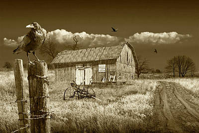 Photograph - Barn For Sale With Black Crows In Sepia Tone by Randall Nyhof