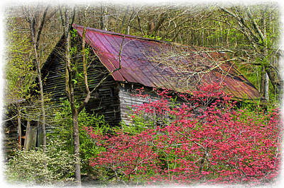 Photograph - Barn In Dogwoods by Debra and Dave Vanderlaan