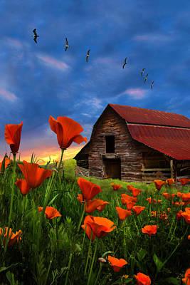 Photograph - Barn In Poppies II by Debra and Dave Vanderlaan