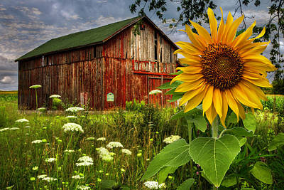 Photograph - Barn Meadow Flowers II by Debra and Dave Vanderlaan