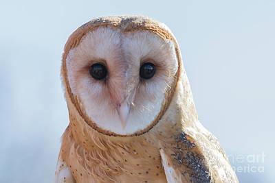 Photograph - Barn Owl 5 by Chris Scroggins