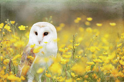 Wall Art - Mixed Media - Barn Owl by Amanda Lakey