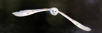 Photograph - Barn Owl In Flight by Grant Glendinning