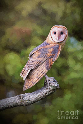 Digital Art - Barn Owl On Branch Painting by Sharon McConnell