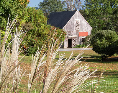 Photograph - Barn Plymouth Massachusetts by Cheryl Del Toro