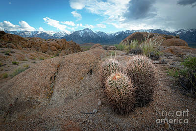 Photograph - Barrel Cactus In Alabama Hills by Michael Ver Sprill