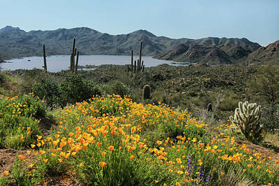 Photograph - Bartlett Lake Wildflowers 5532-030519 by Tam Ryan