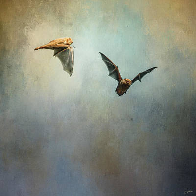 Photograph - Bat Flight by Jai Johnson