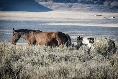 Photograph - Bay Mare And Foal Of The South Steens Herd by Belinda Greb