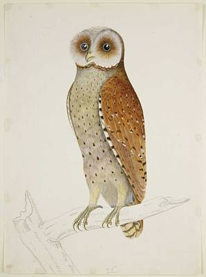 All You Need Is Love - Bay Owl 1824 by  Briois  J.  J Briois  by Celestial Images