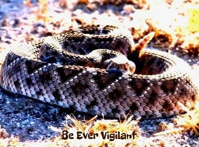 Photograph - Be Ever Vigilant 2 by Judy Kennedy