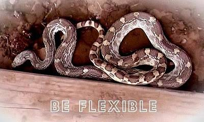 Photograph - Be Flexible by Judy Kennedy